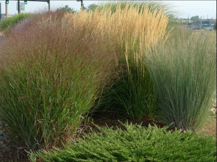 87 best ideas about lyons landscape on pinterest the for Wild ornamental grasses