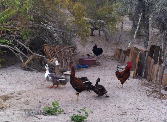 Resultado de imagen de blogspot, rural madagascar