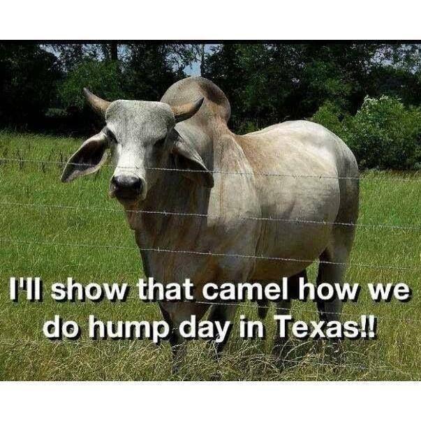 c8dd3186919212649984c79832231582 texas humor texas funny best 25 funny wednesday memes ideas on pinterest period humor,Texas History Funny Meme