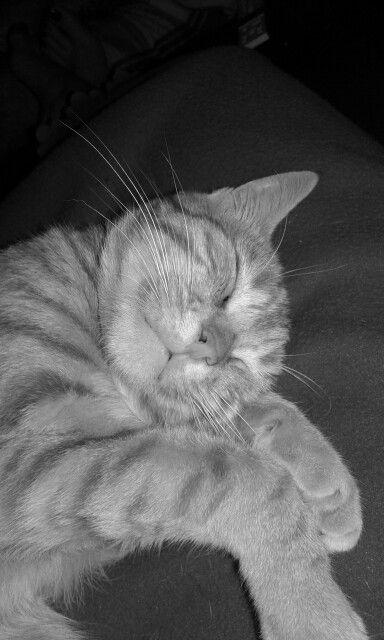 Léon en mode sieste