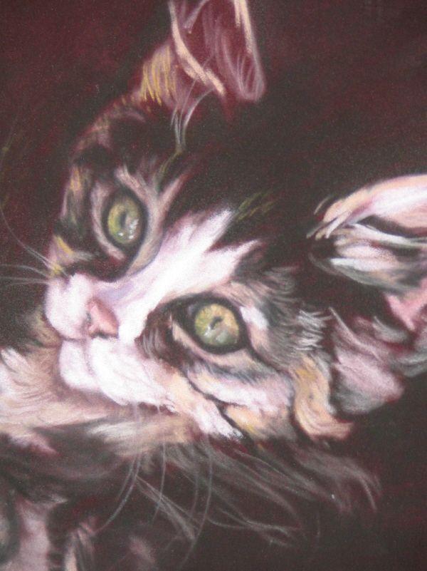 Cat pastel on suede board. Artist Gail Flint