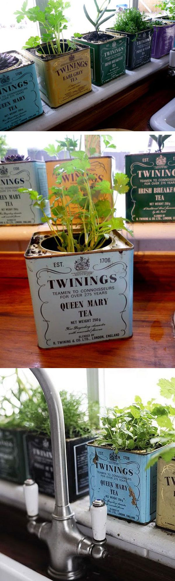 tea tins = flower pots, herb garden