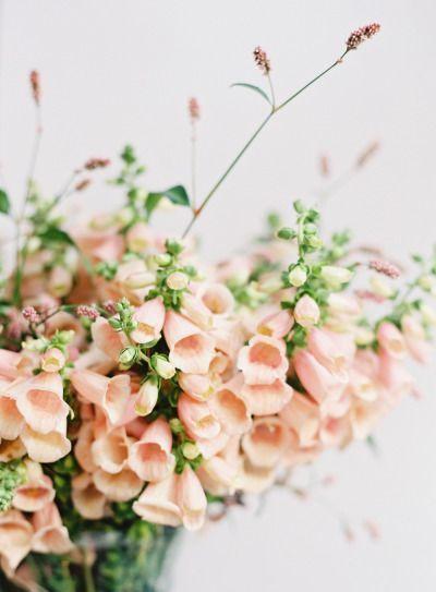 ♥️ more little flowers  https://www.pinterest.com/Jeapiebel/little-flowers/