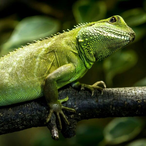 17 Best Images About Cool Lizzards On Pinterest Pets To