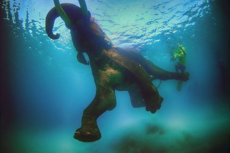 "If elephants can do it....Elephant ""Rajan"" swimming off the Andaman Islands, India via BBC Magazine"
