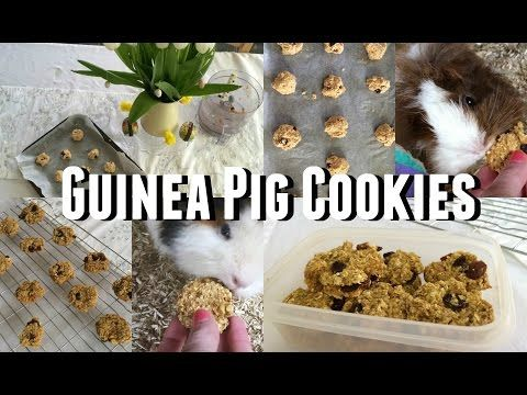 DIY Guinea Pig Treats - Cookies |♡Imy'sAnimals♡ - YouTube