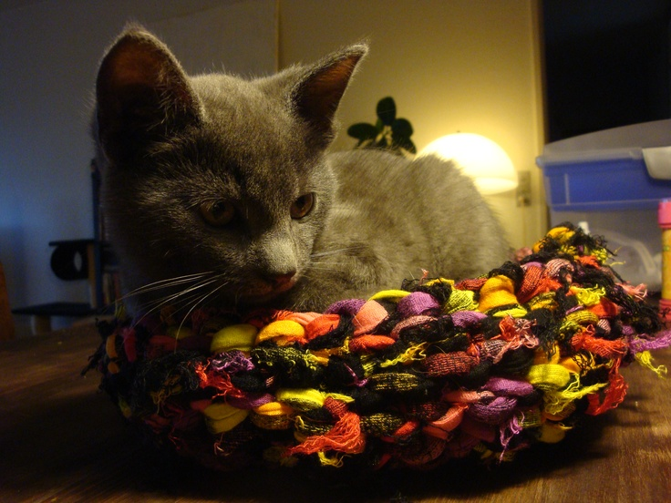 Should have been a breadbasket, but became a kitten-keeper . He's much bigger now, but still loves his basket :D. Made of zpaghetti.