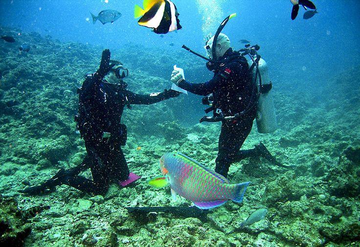Lokasi Idola Baru Para Wisatawan Di Peraian Laut Jepara