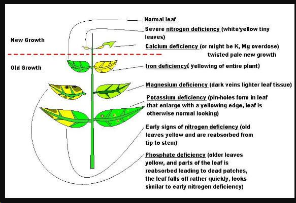 the effect of calcium on plant Read about calcium health benefits menu toggle navigation algaecal call toggle the amount of calcium consumed at one time such as in a meal can also affect it is important to note that these substances affect the absorption of calcium from the plant itself not the calcium found in.