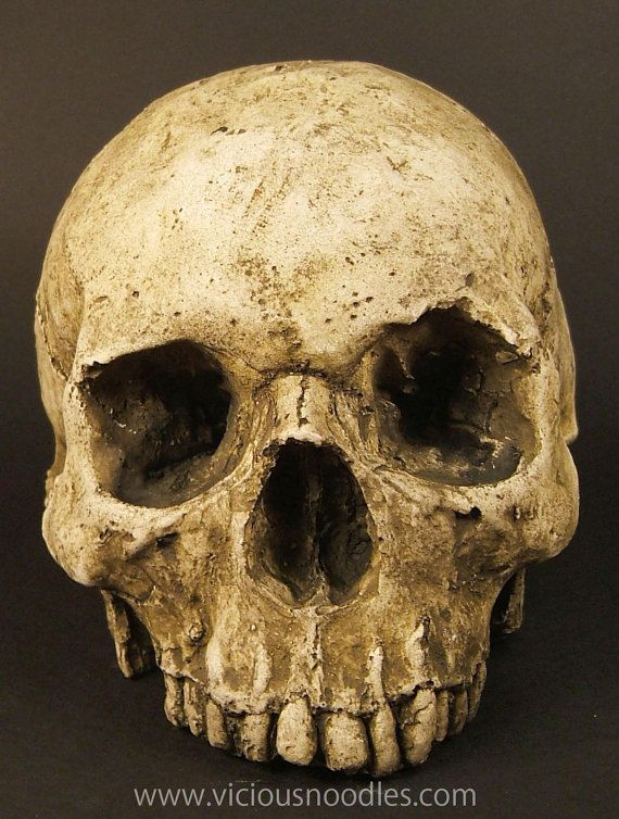 HUMAN SKULL REPLICA full size realistic replica by viciousnoodles