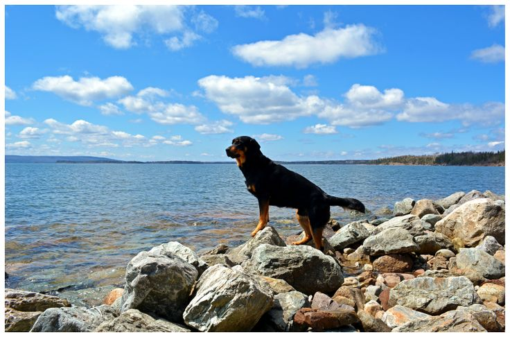 Bring your pet to the endless shores of the Bras d'Or, take off the collar and play!