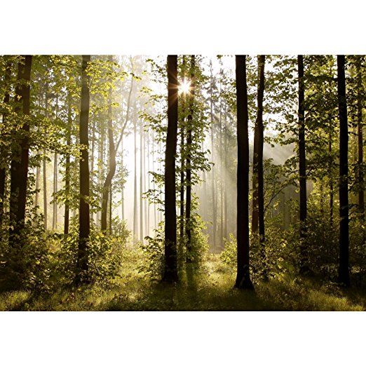 Fototapete Wald Baume Vlies Wand Tapete Wohnzimmer Schlafzimmer Buro