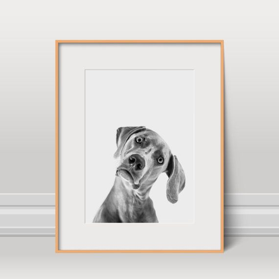 Chien affiche Animal Print mignon noir et blanc par FinlayAndNoa