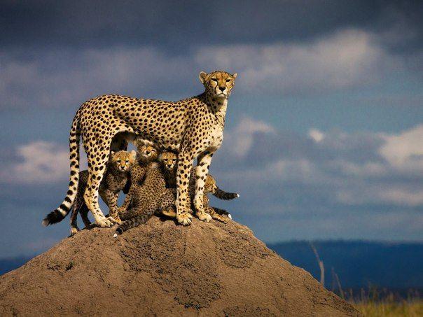 Экология: береги природу! | Животные и растения ...