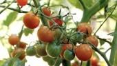 Las semillas ecológicas