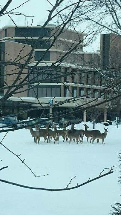 Oh Deer Visitors At Beloit Memorial Hospital Feb 7 2015 Beloit Wi On Wisconsin