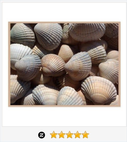 #SeaShells Postcard #JustSold #ThankYou :) https://www.zazzle.com/seashells_postcard-239419411384799434