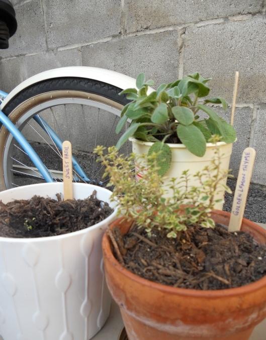 Starting my urban herb garden.