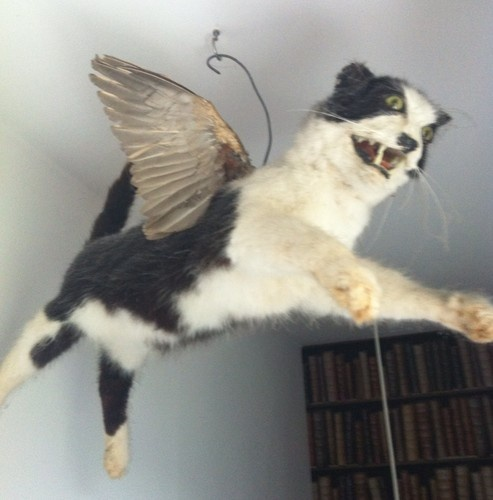 Taxidermy Flying Cat