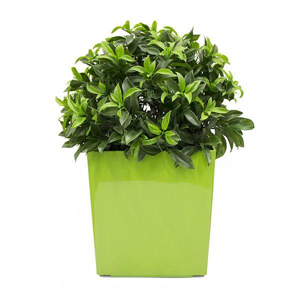1000 id es propos de plante artificielle exterieur sur - Hibiscus exterieur en pot ...
