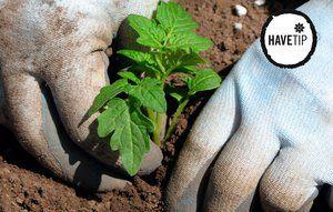 Du kan med fordel plante de sidste afgrøder - fx kan du stadig nå at gro salat, radiser og gulerødder.