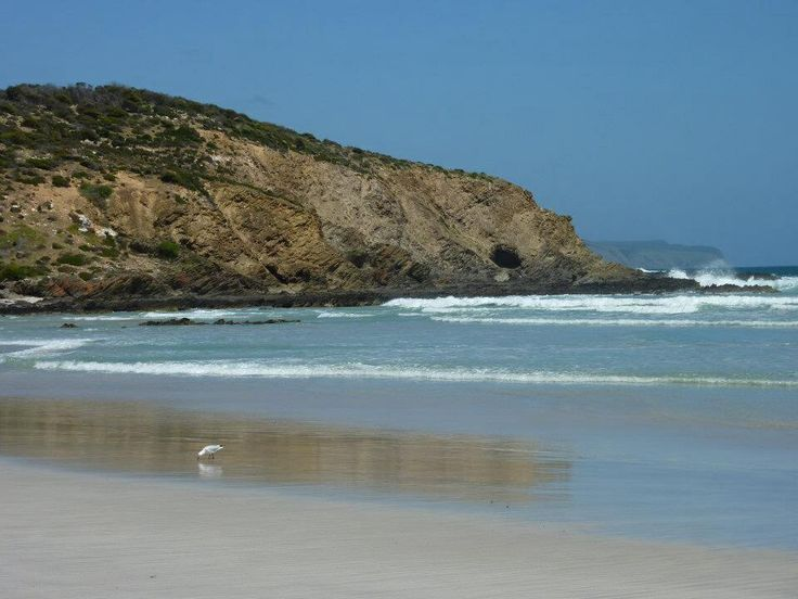 Seagull, Kangaroo Island South Australia. Photo Tania Cavaiuolo