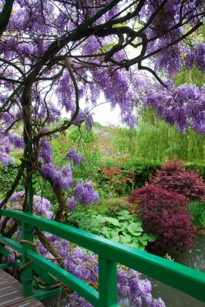 Monet's Garden - Giverny, France ( glycine, prunus rouge, erable, saule pleureur )