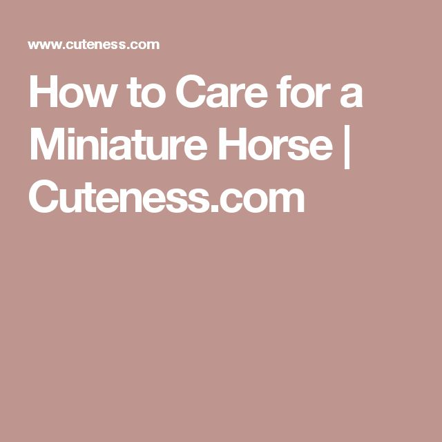 How to Care for a Miniature Horse | Cuteness.com