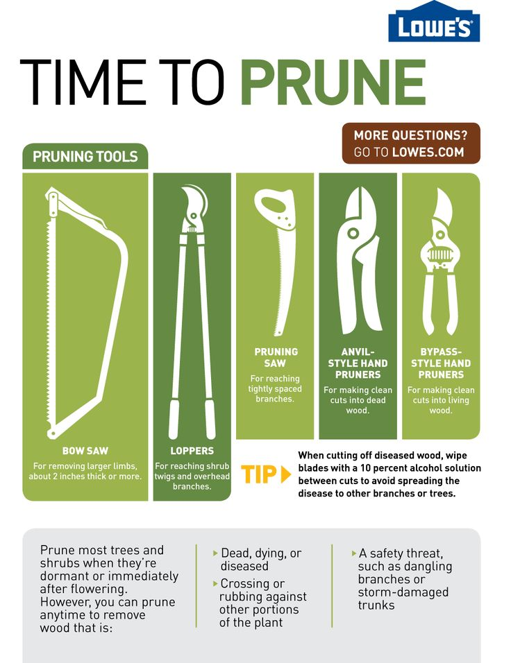 Tips for pruning this fall!