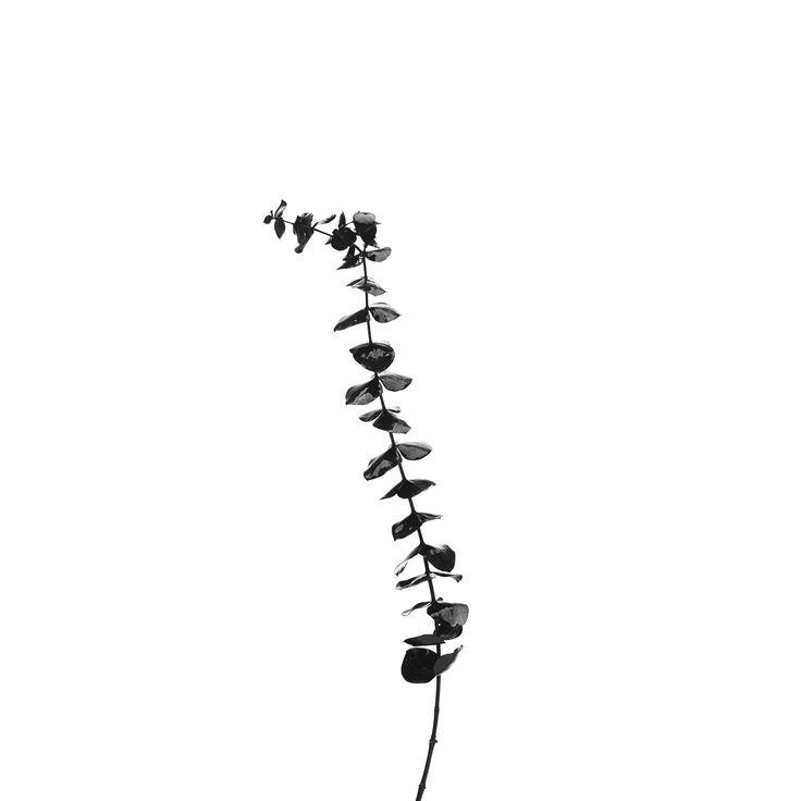 Flower. By Emil Monty Freddie
