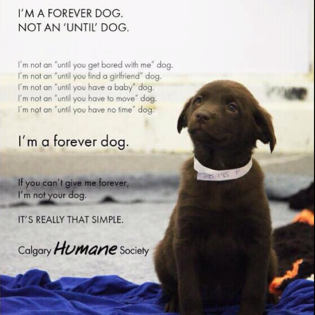 Forever dogPuppies, Friends, Quotes, Pets, Human Society, Forever Dogs, Families, People, Animal