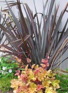 Dog friendly shrubs: New Zealand Flax or Phormium;  Burkwood Osmanthus (Osmanthus Burkwoodii)