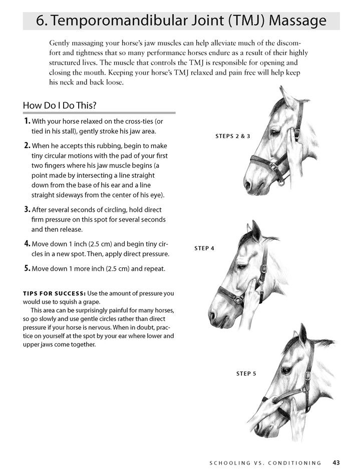 Best Horse Massage Images On   Animal Anatomy