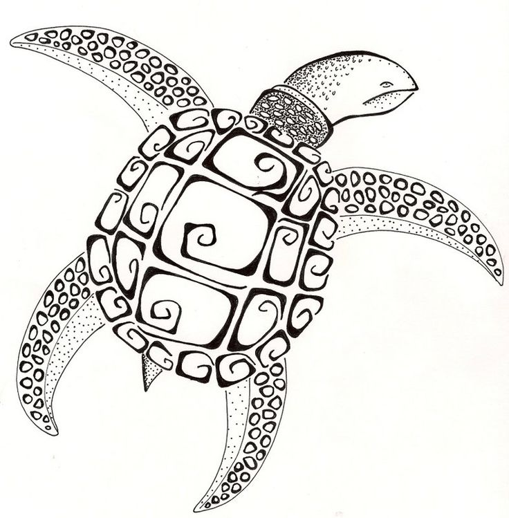 48 best Zentangle Turtles images on Pinterest Drawings Sea