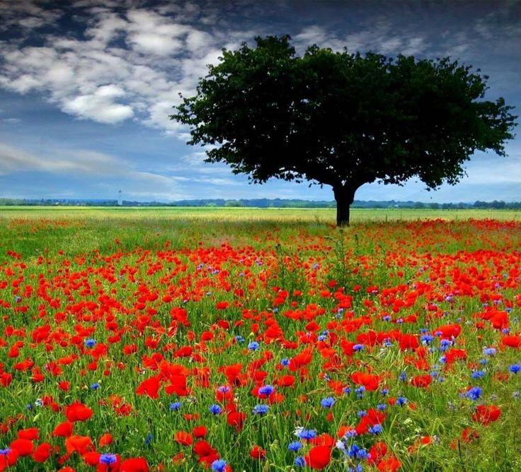 EFEMÉRIDES: Una excelente novela y un Premio Nobel exótico, por Luis Antonio Novella        Trece han sido hasta ahora los galardonados con el Premio Nobel de Literatura nacidos en un mes de mayo, parece pues que, además de ser fructífero en lo relativo a las flores, también da buenas cosechas de escritores.  Para leer más...