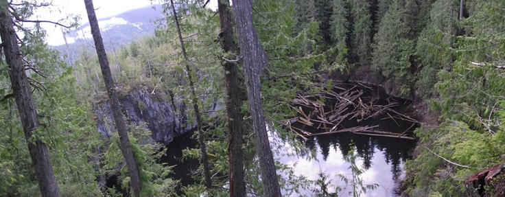 """Devil's Bath Sinkhole, near Port Alice, BC.  Benson River at low flow disappears through this cave/sinkhole system.  Devils Bath Cave """"clamber in"""" entrance on S side of sinkhole below Alice Lake Main ~ 200 m from viewing platform.  Salmon can sometimes be viewed in this cave!  Benson River Cave, cave diving entrance to NW of Devils Bath along river shore.  Walk to cave entrance exhibits several interesting types of sinkholes (one named Salmon Safari sinkhole), karst windows, springs and…"""
