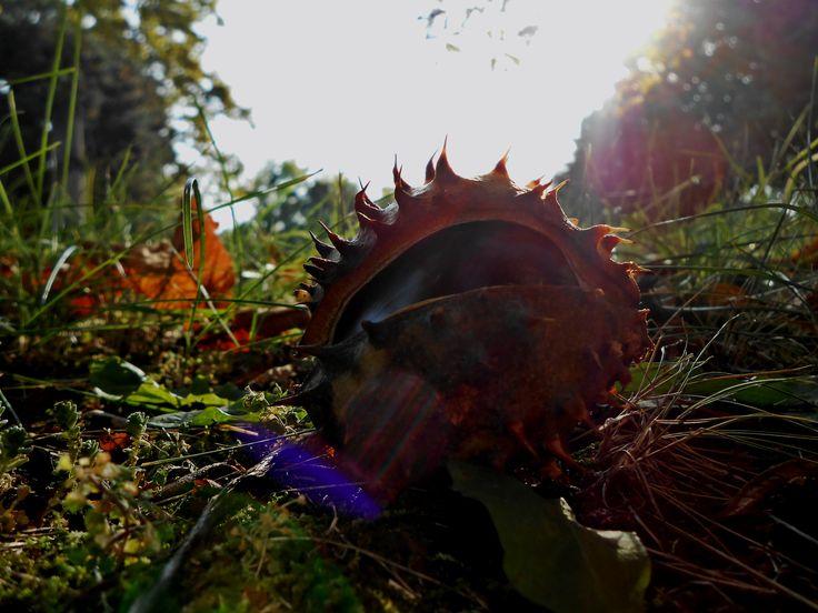 Őszi gesztenyés fény a Fiumei úti sírkertben. Autumn. Hungary. Chestnut. Sunshiny. Sun.
