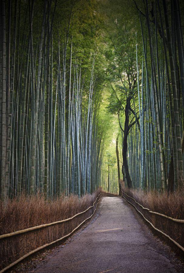 Bamboo path of Arashiyama, Kyoto, Japan