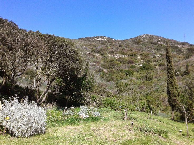 Passeggiando nell'Orto dei Semplici Elbano, Rio nell'Elba 6 Aprile 2015