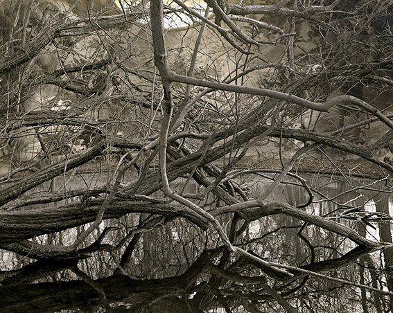 Resultado de imagen de pablo genoves canal
