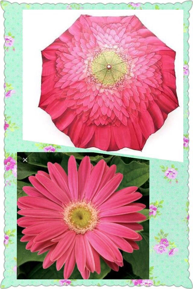 Pink gerbera daisy umbrella canopy.