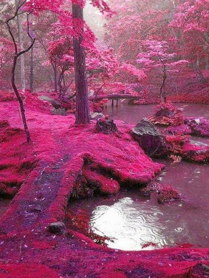 Jardín de Saiho Ji en Kyoto, Japón.