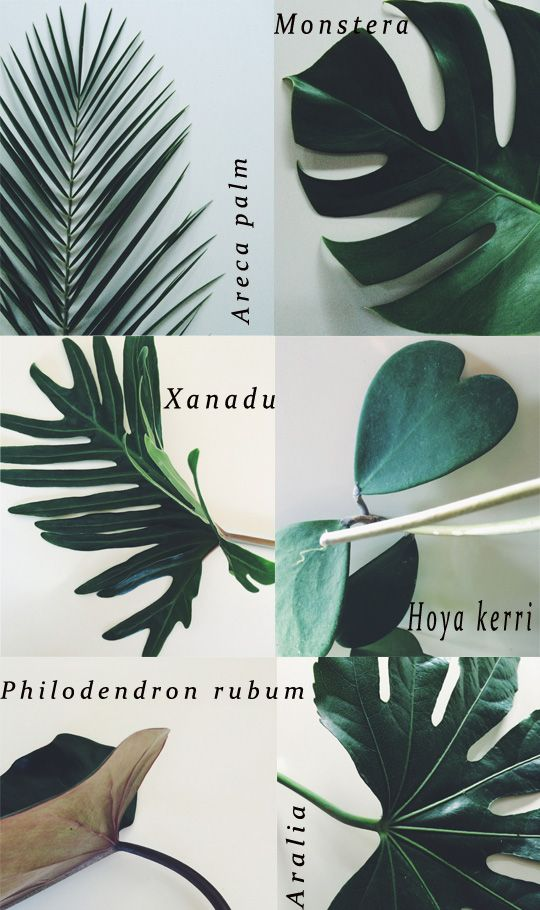 Cocoon Home | Botanical Inspiration: Foliage (