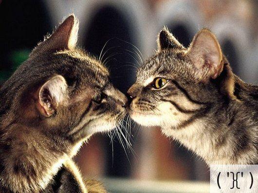 23 best Cat Emoticons images on Pinterest