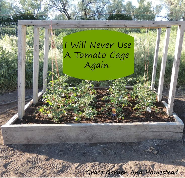 Be done with tomato cages forever! This simple DIY tomato planter will last year after year and you won't have to store old cages or buy more as they break.
