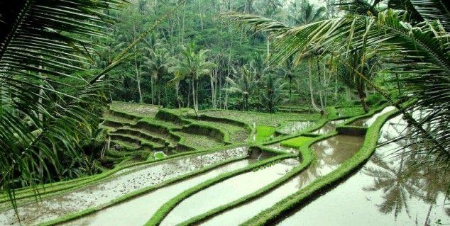 Bali, Indonesië............................lbxxx.