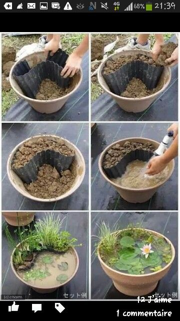 8 best images about bassin et plantes aquatiques on pinterest miniature cyperus papyrus and sun - Mini bassin aquatique ...