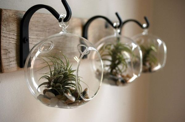 I found some amazing stuff, open it to learn more! Don't wait:http://m.dhgate.com/product/3pcs-set-diy-planter-vase-with-air-plant/255194771.html