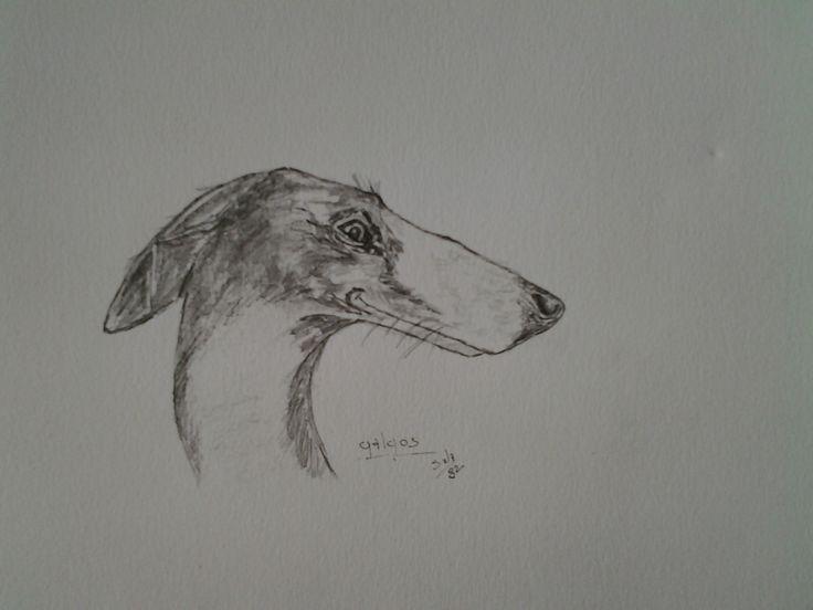 Un levriero galgo di profilo su carta disegno con matita e china. Luglio 2014.