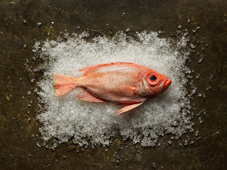 Fresh Food Market Photography | Abduzeedo Design Inspiration